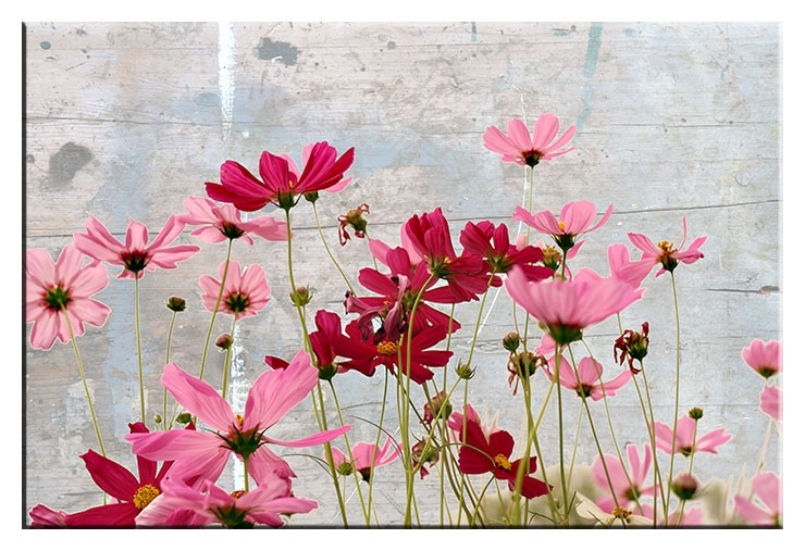 Modernes Leinwandbild - Flower Dream