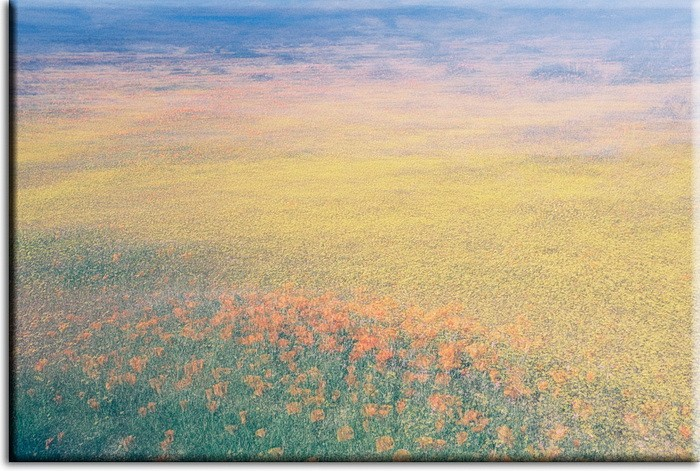 Herrliche Blumenwiese Leinwandbild - Der Frühling -