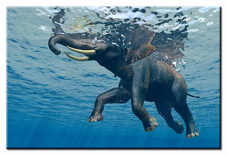 Modernes Leinwandbild - Jumbo Bubbles 2 - Elephant under water